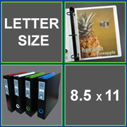 Letter Size Sheet Protectors 8.5 x 11 inch